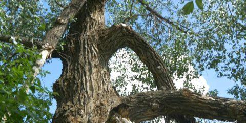 06 Big Tree